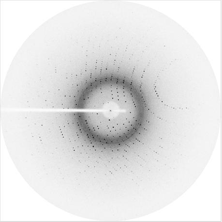 Figure B7 Diffraction pattern of lysozyme crystals, co-crystallized with 10% trehalose. B3.1.2 [B] Data Processing Processing of 180 frames of the diffraction pattern was done by using CCP4i software.