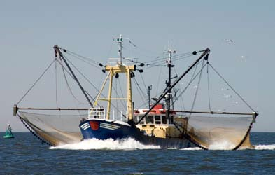 Among the most destructive fishing methods in the World is bottom trawling (Thrush and Dayton, 2002; Pusceddu et al., 2005; Tillin et al., 2006; de Juan et al., 2007, Hixon et al., 2007).