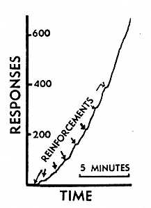 Fig. 1. 'Reconditioning' of a superstitious response after extinction. The response of hopping from right to left had been thoroughly extinguished just before the record was taken.