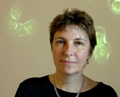 Jelena Gavrilovic Lecturer, 75% time, University of East Anglia, Norwich Junior Group Leader, 60% time, Strangeways Laboratory Post-doc, 50% time, Strangeways Laboratory Senior Lecturer University of