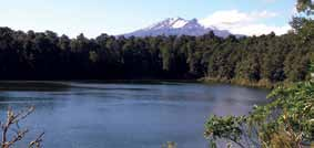 Ohakune Walks (less than 3 hours) See Ohakune map (page 18) 12. Rimu Walk 15 minutes return.