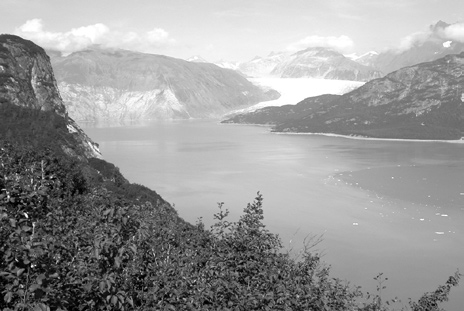 Warmer temperatures have contributed to melting of the 2,000 foot thick glacier and growth of vegetation in areas once