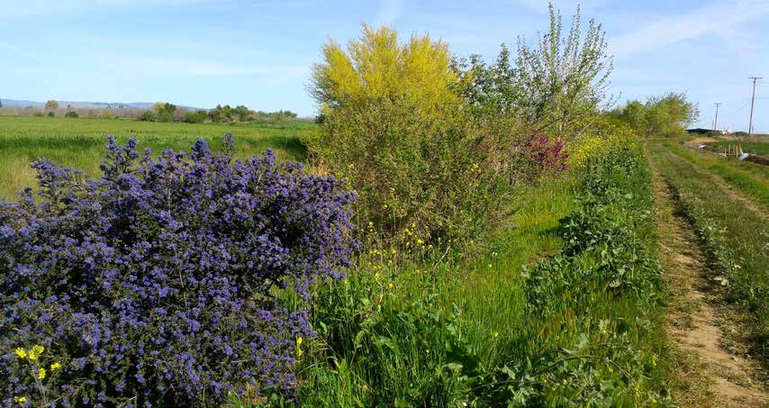 Provide Habitat for Pollinators on Farms Farmers who want to take a more active role in increasing the numbers of native bees around farms can do three things to make the land more hospitable for
