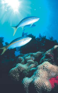for Evaluating Marine Protected Area Management