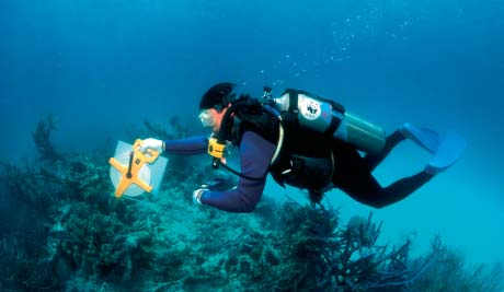 WWF-CANON/JÜRGEN FREUND A diver takes vital measurements at the Tubbataha Reef National Marine Park, Philippines.