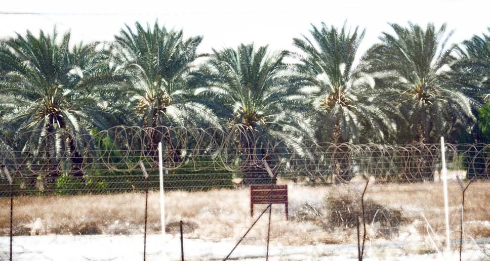 Feasting on the Occupation: Illegality of Settlement Produce and the