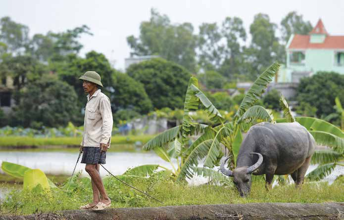 FAO/AFP-Hoang Dinh Nam It is likely that as part of climate change adaptation or mitigation measures, or efforts to conserve genetic resources, the introduction of domesticated or wild species into