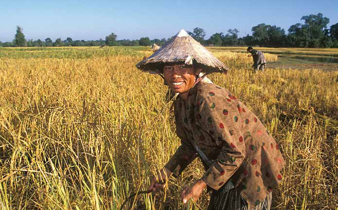 (two NGOs) are working with 140 farmers on the conservation of rice and maize varieties.