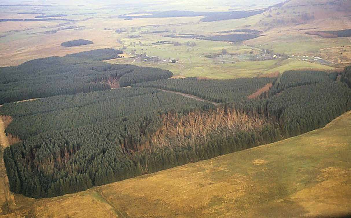 Living with Storm Damage to Forests Interactions between trees within stands The most obvious beneficial effect of trees on one another within forests is at the forest edge, where trees, conditioned