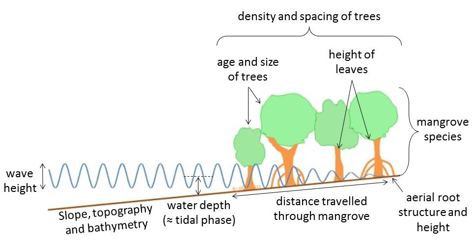 3. Factors affecting wave attenuation in mangroves The factors known to affect the reduction in wave height as waves pass through mangroves include water depth, which is a function of