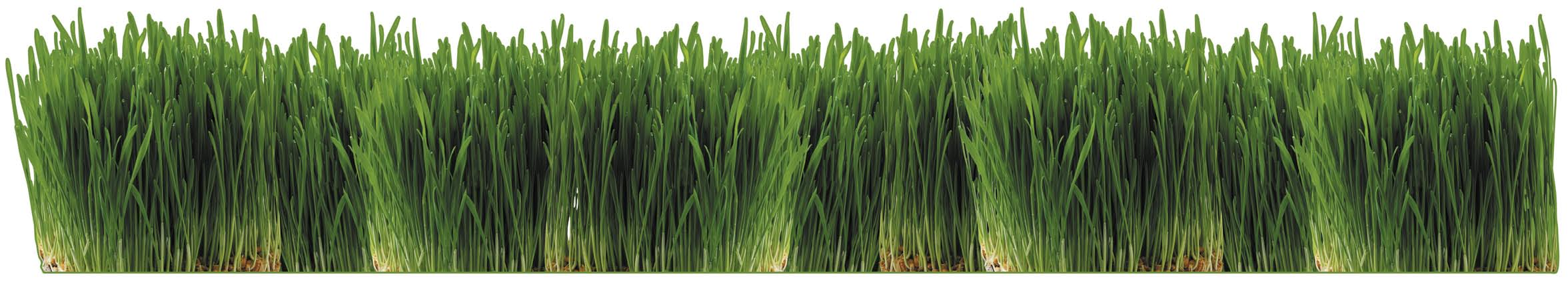 To germinate cool season grass (such as winter rye), apply light, frequent waterings up to four times a day during the first seven to ten days Gradually increase run time and decrease frequency as