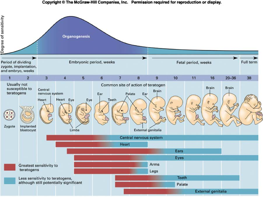 8 Milestones: Pregnancy (-9 months to 0) As reflected in the Five by Five, a large focus is placed on the mother s physical and psychosocial well-being as well as the foetus throughout pregnancy.