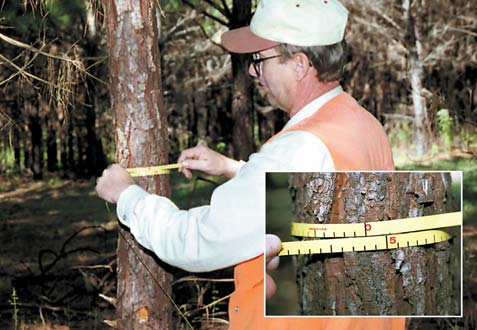 4 TREE DIAMETER Diameter at breast height (DBH) is the diameter of the tree stem 4 1 2 feet above the ground.