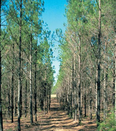 FIELD EVALUATION SHEET - EXAMPLE FIRST THINNING Field Evaluation: Scatter 1/100th acre plots throughout plantation. Measure all trees within a 11 feet, 9.3 inch radius (11.775 ft).