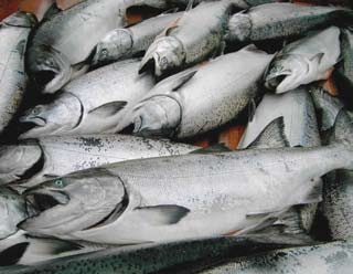 Commercial Salmon Facts Both wild and farmed salmon are healthful choices that are low in total fat and high in protein, vitamins, minerals and omega-3s.