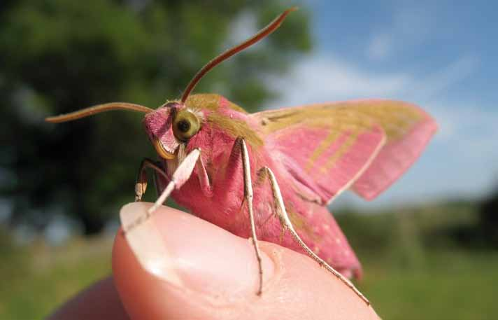 MEASURING THE STATE OF NATURE Measuring the state of nature Elephant hawkmoth Katie Fuller (RSPB) In this report, we have used figures to represent the trends in species abundance and distribution,
