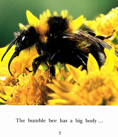 Kindergarten EXAMPLE ILLUSTRATING READING TEXT COMPLEXITY FOR STANDARD 10 Bumble Bee by Pat Quinn, photographs by Nic Bishop This is a non- fiction text with large colorful photographs.