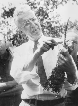 48 WISCONSIN BLUE BOOK 1995 1996 Professor Laurence Graber earned the title of Mr. Alfalfa for his work to increase alfalfa production across the state.