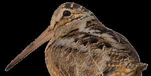 For example, Henslow s Sparrow and Upland Sandpiper (which benefit from the Conservation Reserve Program and grazing management on working grasslands, respectively) have responded positively to the