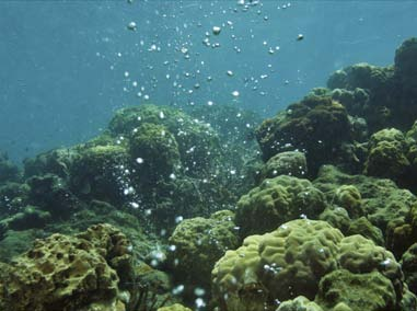 Ultimately, only the reduction of atmospheric CO2 levels provides the solution to ocean acidification; nevertheless, there may be ways in which ocean acidification research can become more