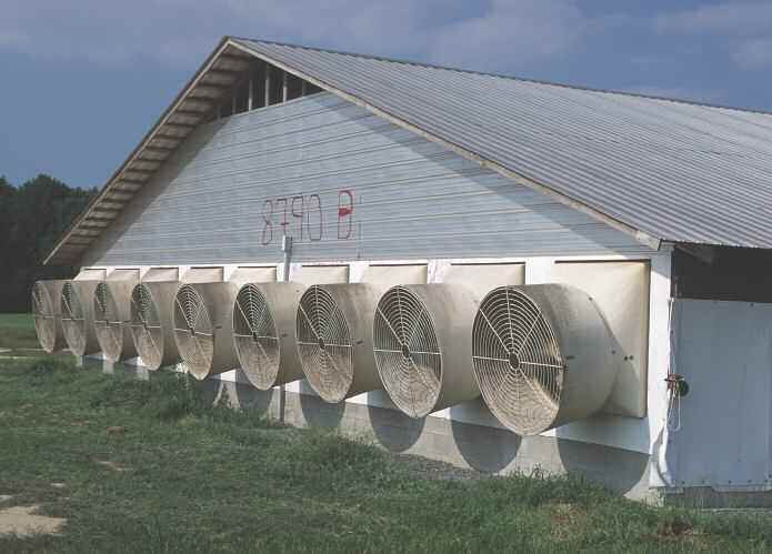 Adding more to the carbon footprint: large fans keep pigs cool in North Carolina.