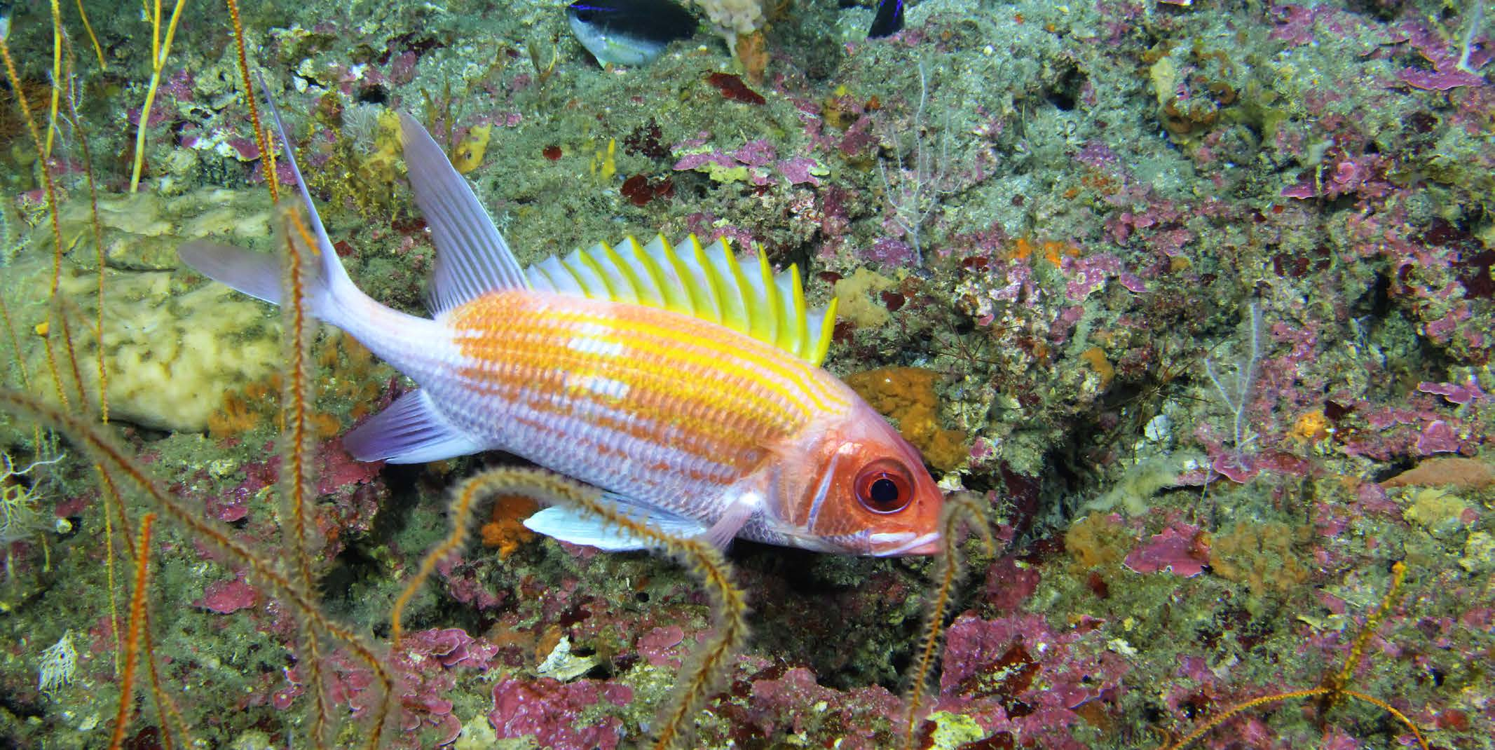 NRDA scientists studied reef fish abundance off the coast of Alabama, September 2014.