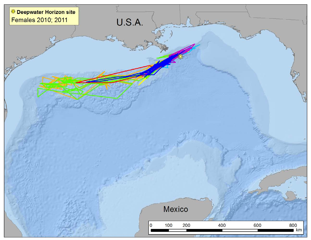 Technology provides information on locations, numbers and movements of marine mammals Source: Oregon State University Satellite telemetry tracks sperm whales in the northern Gulf.