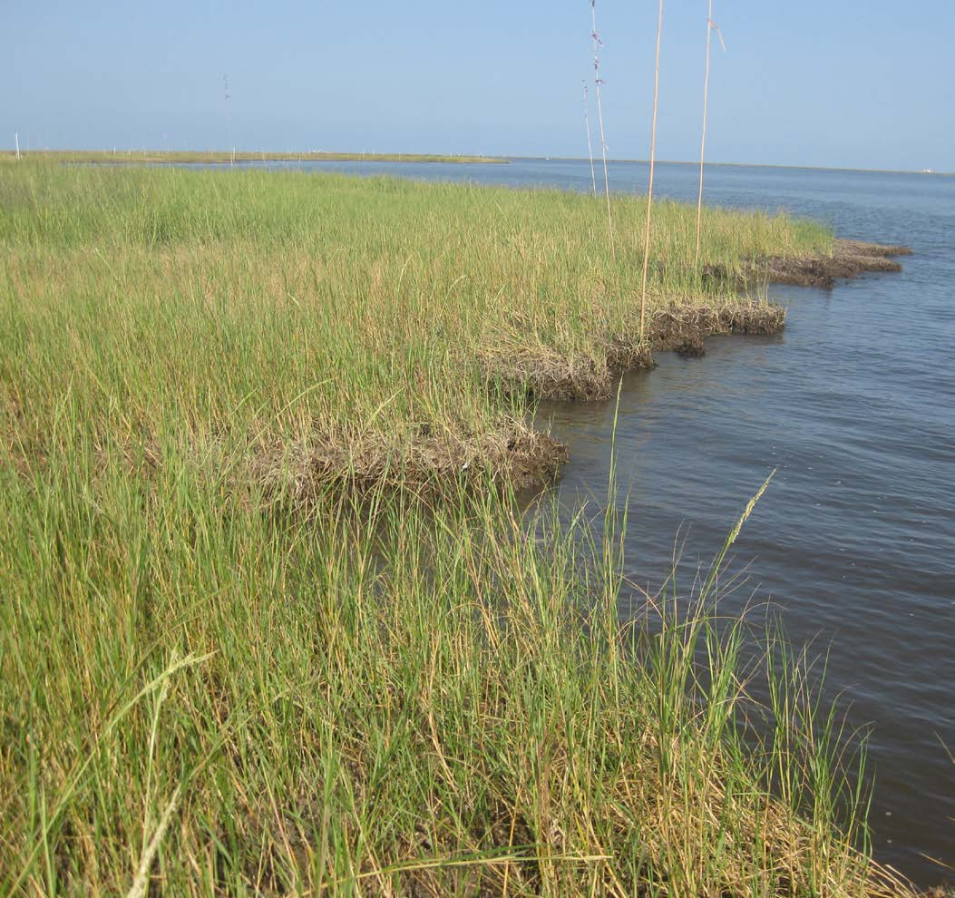 Shoreline assessment teams surveyed 3,220 miles of marsh shoreline.