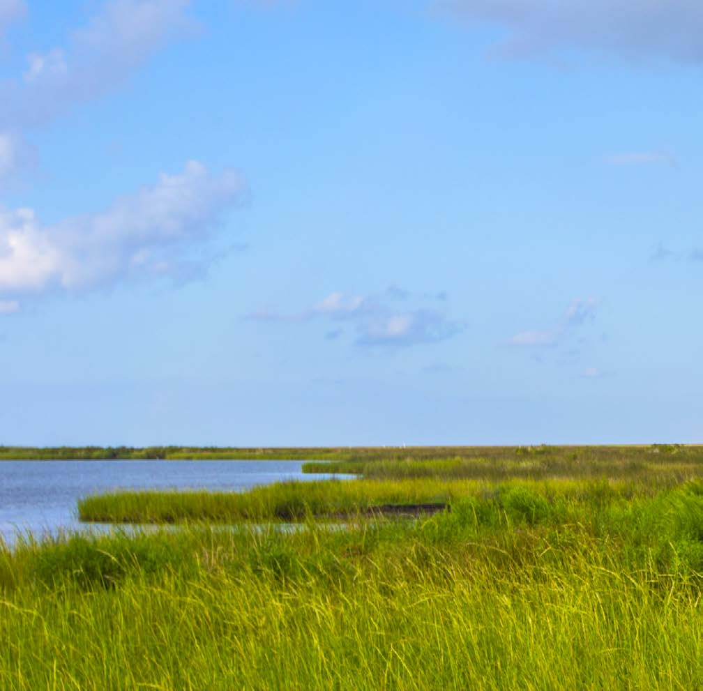Types of restoration projects underway Ecological Addresses injury to natural resources such as fish, wildlife, biota and habitat (e.g., marshes).