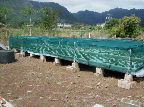 6. Lettuce plants under a PVC frame covered with 50% shade cloth 7. Developing Red Sails lettuce Growing lettuce hydroponically Lettuce can be grown using commercial hydroponic fertilizers.