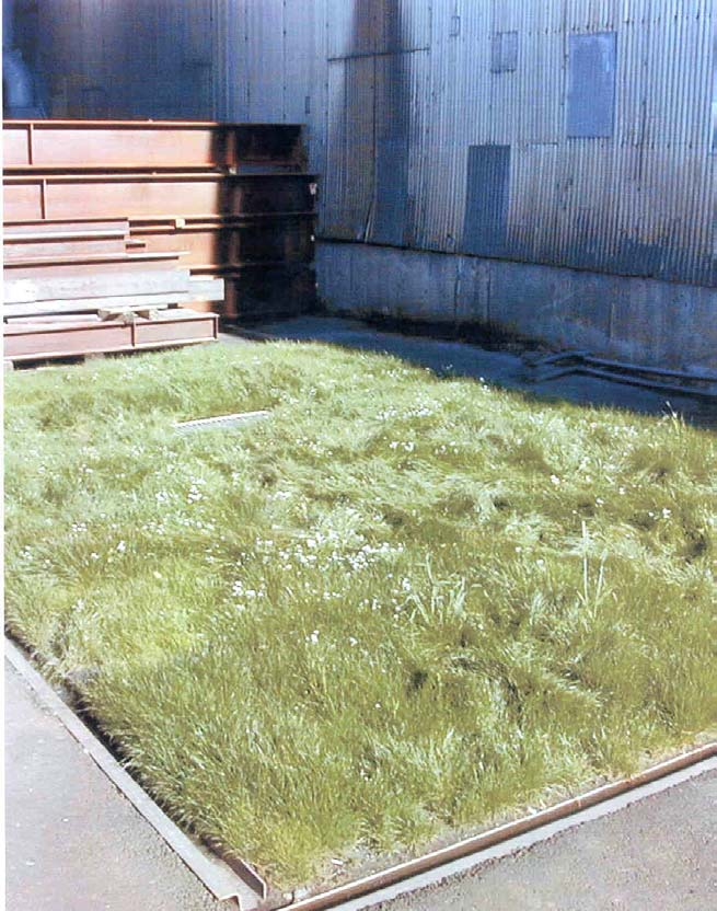 The vegetation must be watered in the summer and maintained by cutting an removal of the grass to a composting facility so that the zinc will not continue to build up but be removed.