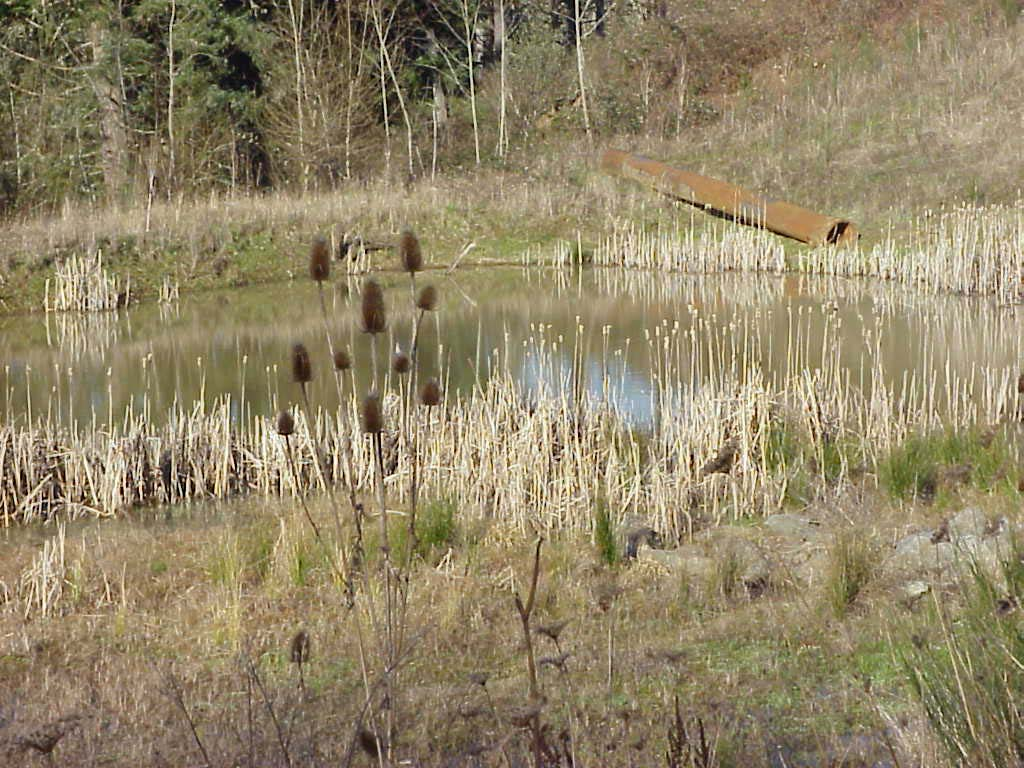 Upper Settling Pond for the Same Time Frame One of the concerns with this wetland was that the inlet discharged to the sediment pond perpendicular to the length of the