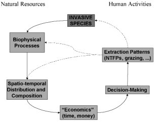 22 ABSTRACTS OF POSTER PRESENTATIONS Forests Figure 1: A general conceptual model of how
