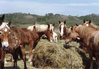 ASC-173 Botulism: A Deadly Disease That Can Affect Your Horse Fernanda C.