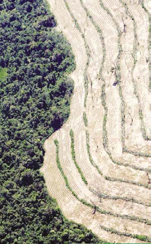 SETTING THE STAGE Wealth, Biodiversity Loss, and Deforestation in Brazil s Cerrado Cattle and soybeans are displacing cerrado (savanna woodland) and forest in Brazil s centerwest region (photo 2).