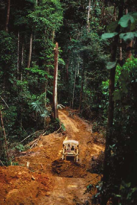 Roads often trigger forest conversion to agriculture.