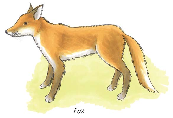 It occurs in every county and estimates reckon that there are up to 200,000 foxes in the country.