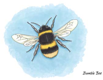 Bumble bees are native to Ireland and their queens hibernate for the winter. Honey bees originated in warmer climes and do not hibernate in the winter in Ireland.