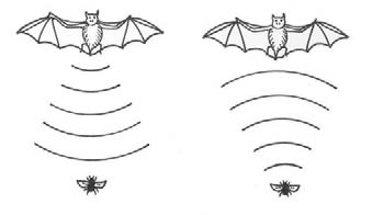 Fifth Class: Bat Bat Latin name They all belong to the order Chiroptera Irish name Ialtóg or Sciathán leathair Bats are a much maligned group of mammals. They are not blind.
