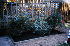 Smooth and further distribute compost with a rake or by hand to create a solid For singular trees and shrubs, mulch is