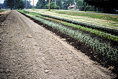 composts will require greater rates. Only apply half the recommended fertilizer rate if growing saltsensitive crops.