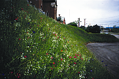 Alternately, a compost berm (mound) may be placed at the base of the slope in lieu of the sediment fence. The berm may be up to 2 feet high by 4 feet wide depending upon the severity of the slope.
