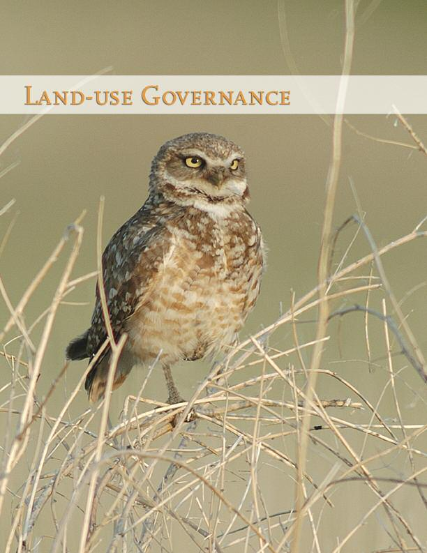 Burrowing Owl Photo
