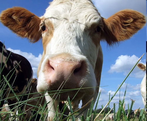 Understanding Word Order Effect on