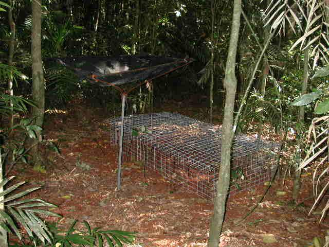 Chapter 4. Resource utilisation feeding preferences - 82 - Each exclosure was 2 x 1m in size and constructed from 40 mm x 25mm welded wire mesh designed to allow foraging M. cervinipes and R.
