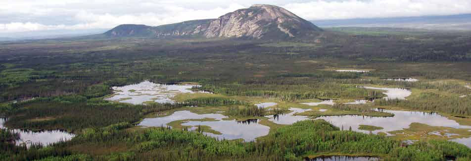 NORTH AMERICA S BIRD NURSERY More than 300 bird species nest in or regularly migrate through the North American boreal forest.