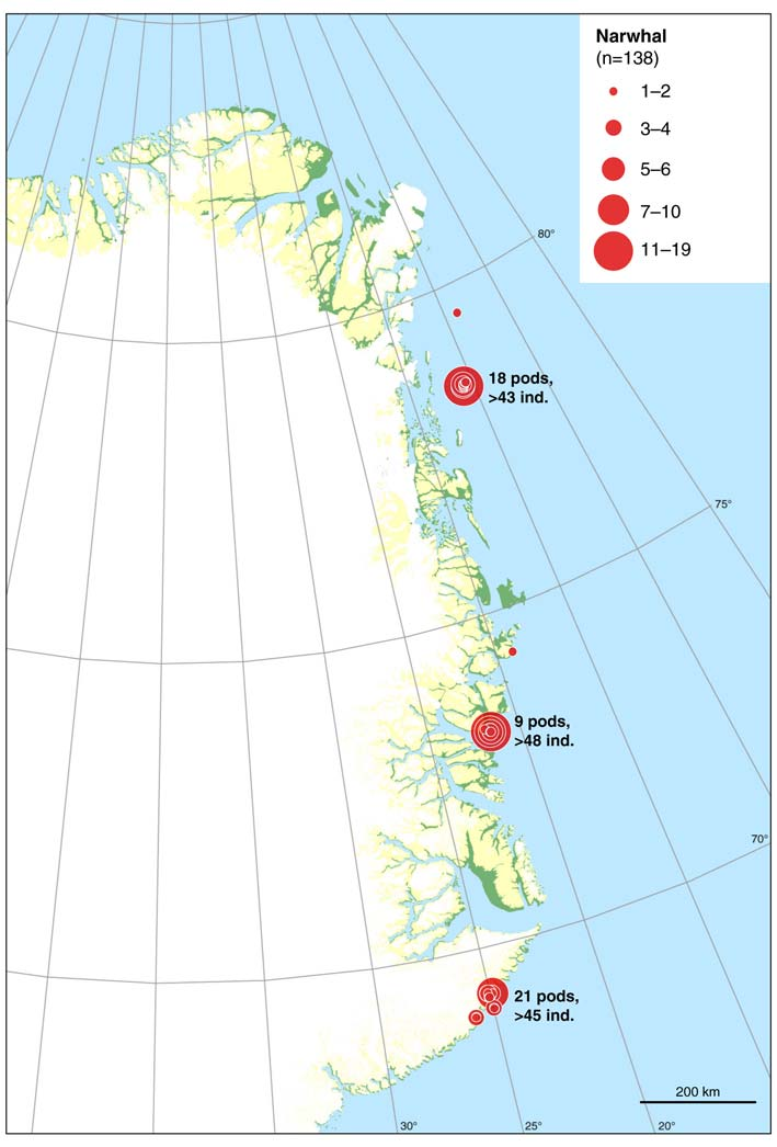 Figure 23. Distribution of observations of narwhals during the surveys in July and August 2009.