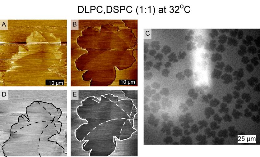 Chapter 6 Orientational Texture in Monolayers 6.4 AFM Friction Reveals Orientational Texture in Monolayers Figure 6.