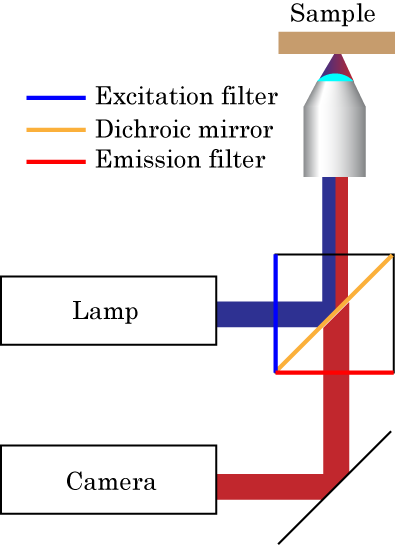 Chapter 3 Fabrication and characterization 3.1 Fluorescence Microscopy lower than the energy of the excitation light, due to some energy loss in the process.