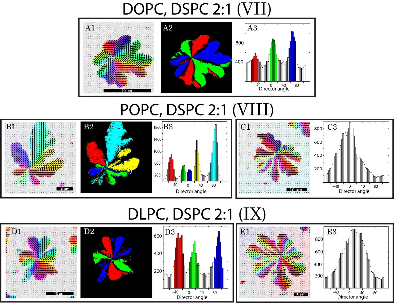 Chapter 5 Influence of Lipid Composition on Texture in Lipid Bilayers 5.3 Distribution of Orientations within the Domains Figure 5.